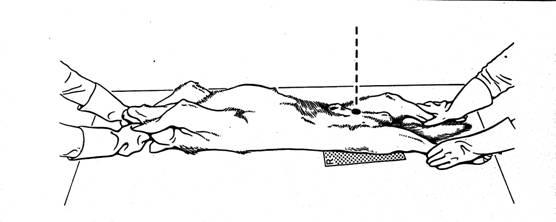 manuális módszerek az ízületi diszplázia kezelésére